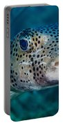 A Large Spotted Pufferfish Portable Battery Charger