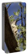 A Nesting Hummingbird Portable Battery Charger