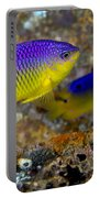 A Pair Of Juvenile Cocoa Damselfish Portable Battery Charger