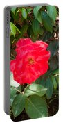 A Pink Rose Being Backlight With The Petals Looking Translucent Portable Battery Charger