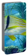A Porkfish Swims By Sea Plumes Portable Battery Charger by Terry Moore
