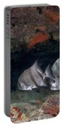 A School Of Atlantic Spadefish Portable Battery Charger by Terry Moore