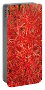 African Blood Lily Or Fireball Lily Portable Battery Charger