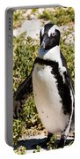 African Penguin Portable Battery Charger