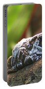 Amazon Milk Frog Portable Battery Charger
