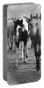 American Quarter Horse Herd In Black And White Portable Battery Charger