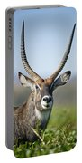 An Antelope Standing Amongst Tall Portable Battery Charger