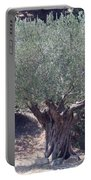 Ancient Old Olive Tree In South France Portable Battery Charger
