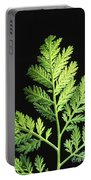 Annual Wormwood Portable Battery Charger