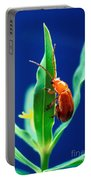 Aphthona Flava Flea Beetle On Leafy Portable Battery Charger