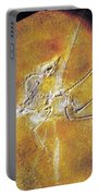 Archaeopteryx Lithographica Portable Battery Charger
