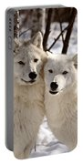 Arctic Wolves Close Together In Winter Portable Battery Charger