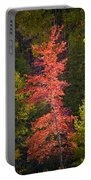 Autumn Scene Of Colorful Red Tree Along The Little Manistee River In Michigan No. 0902 Portable Battery Charger