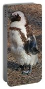 Baby African Penguin Portable Battery Charger
