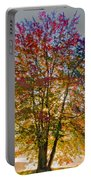 Backlit Maple In Autumn's Light Portable Battery Charger