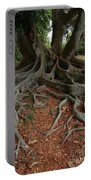 Banyan Tree And Roots In Sarasota Florida Portable Battery Charger