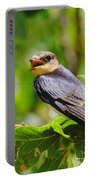 Barn Swallow In Sunlight Portable Battery Charger