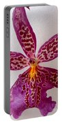 Beallara Marfitch - Howard's Dream - Orchid Portable Battery Charger