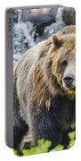 Bear On The Prowl. Portable Battery Charger