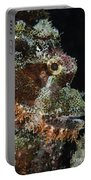 Bearded Scorpionfish, Indonesia Portable Battery Charger
