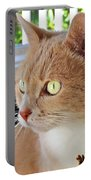 Beautiful Cat With Yellow Eyes Closeup Portable Battery Charger