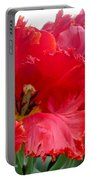 Beautiful From Inside And Out - Parrot Tulips In Philadelphia Portable Battery Charger