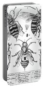 Bee Anatomy Historical Illustration Portable Battery Charger