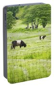 Belted Galloway Cows On  Farm Rockport Maine Photo Portable Battery Charger