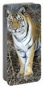Bengal Tiger In Pench National Park Portable Battery Charger