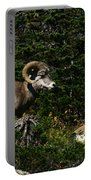 Big Horn Sheep Glacier National Park Portable Battery Charger