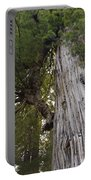 Big Tree In Prairie Creek Redwoods State Park Portable Battery Charger