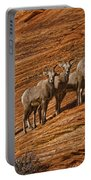 Bighorn Sheep, Zion National Park, Utah Portable Battery Charger