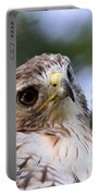 Bird - Red-tailed Hawk - Bashful Portable Battery Charger