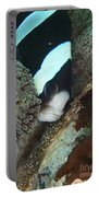 Black And White Anemone Fish Looking Portable Battery Charger by Mathieu Meur