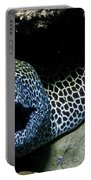 Black And White Honeycomb Moray Eel Portable Battery Charger