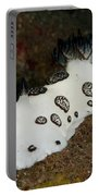 Black And White Spotted Budibranch Portable Battery Charger