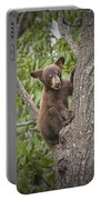 Black Bear Cub Hanging On Portable Battery Charger