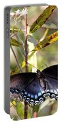 Black Beauty In The Bush Portable Battery Charger