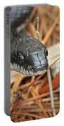 Black Snake Portable Battery Charger
