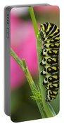 Black Swallowtail Caterpillar On Garden Portable Battery Charger