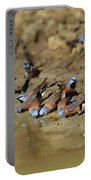 Black-throated Finches At Waterhole Portable Battery Charger