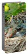 Blackbird Nest Portable Battery Charger