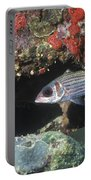 Blackfin Squirrelfish Swimming Portable Battery Charger