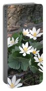 Bloodroot Portable Battery Charger