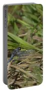 Blue Corporal Dragonfly Portable Battery Charger