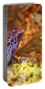 Blue Poison Dart Frog Portable Battery Charger