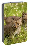 Bobcat Kittens Portable Battery Charger
