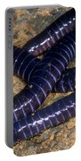 Boettgers Caecilian Portable Battery Charger