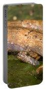 Bolitoglossine Salamander Portable Battery Charger