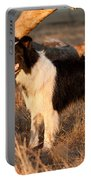 Border Collie At Sunset Portable Battery Charger